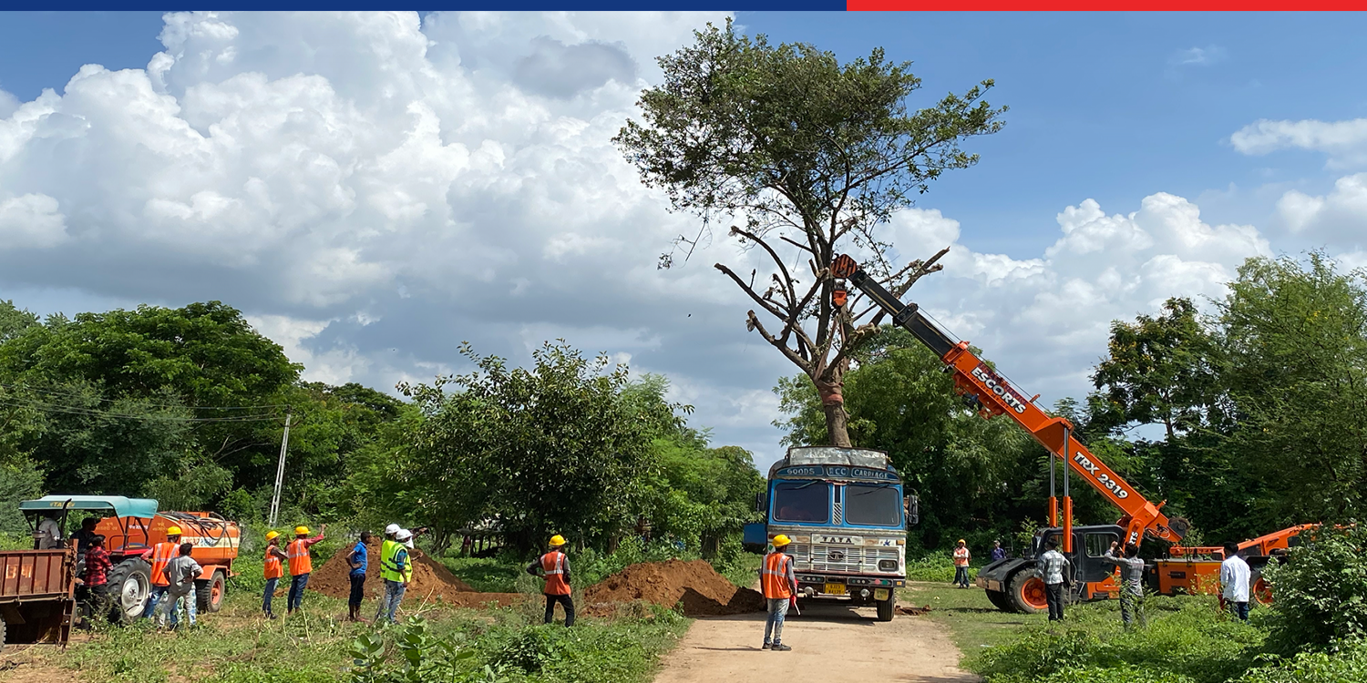 Tree Transplantation work under progress in Vadodara, Gujarat